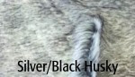 Silver Black Husky - Product Image